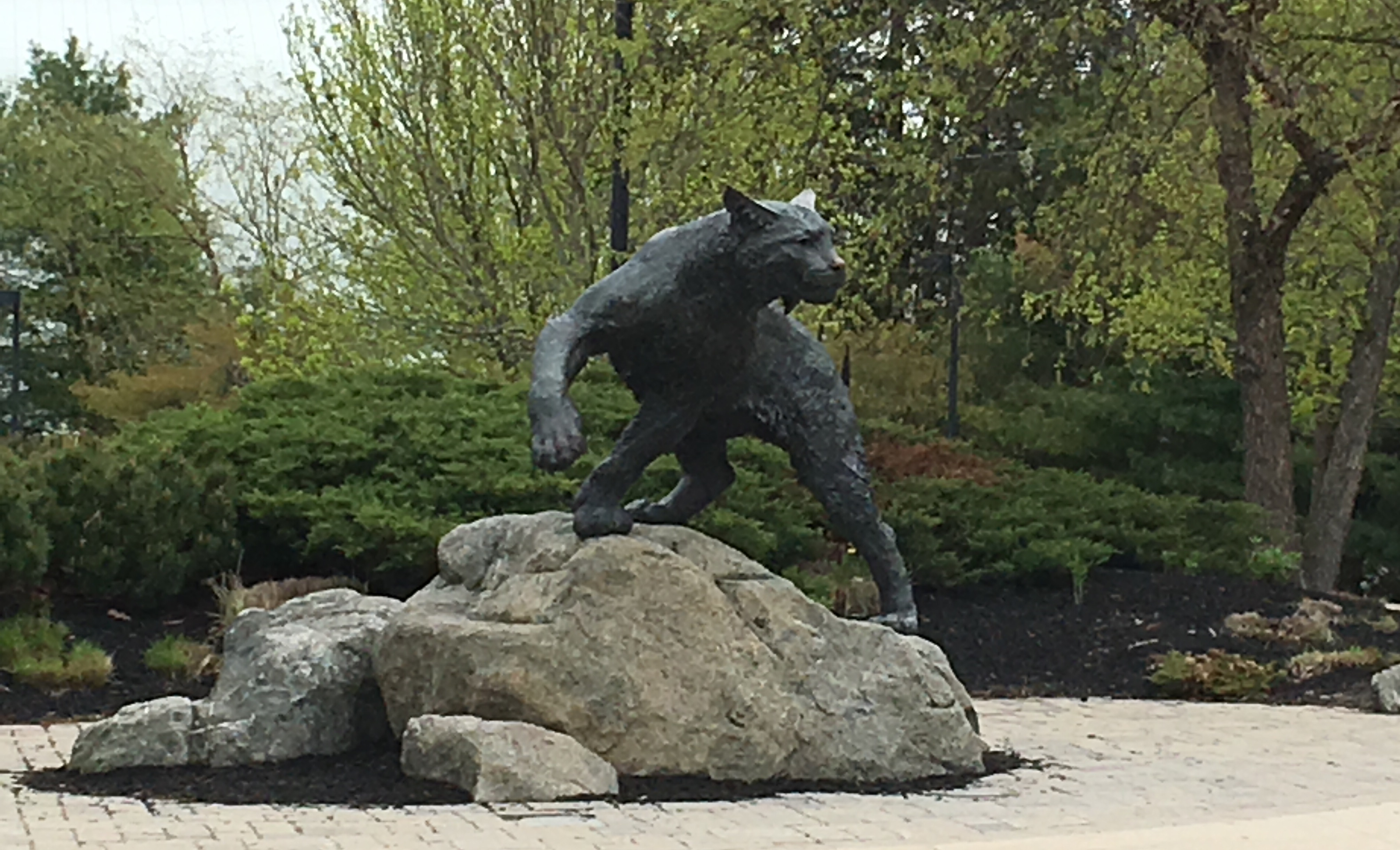 UNH wildcat px